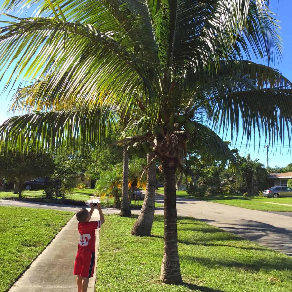 Palm Tree Scavenger Hunt… A Walk Around the Block