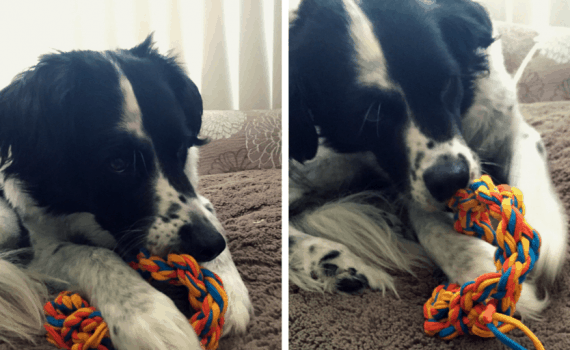 This dog toy is created from t-shirt yarn. This diy dog toy is fast and easy to create for your pet!