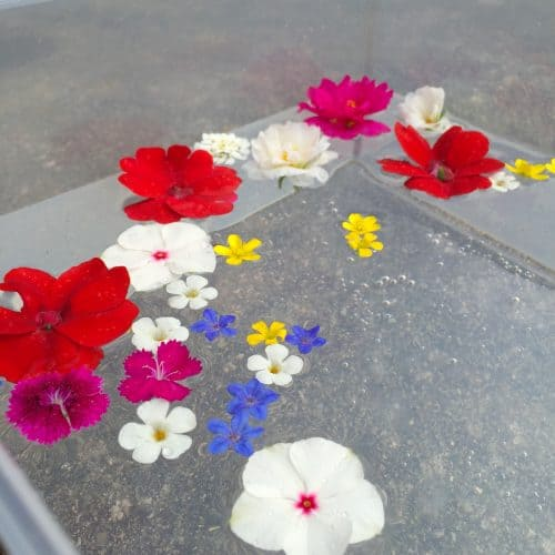 This floating flower sensory bin is a fun free toddler activity! From picking flowers to experimenting through play-based learning your kid will enjoy this outdoor activity!
