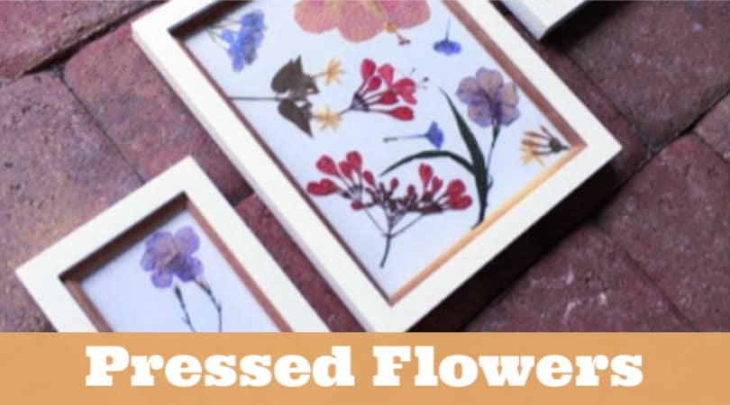 Check out this tutorial for the best way to press flowers with kids. They can collect the flowers, press them, and arrange a beautiful piece of artwork. It's a fun spring activity for kids that has been around for ages.